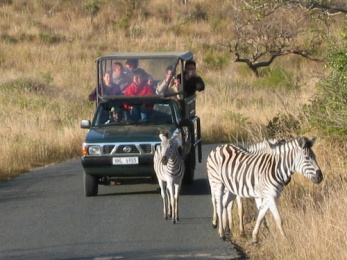 zebras-on-the-road-1557483-640x480